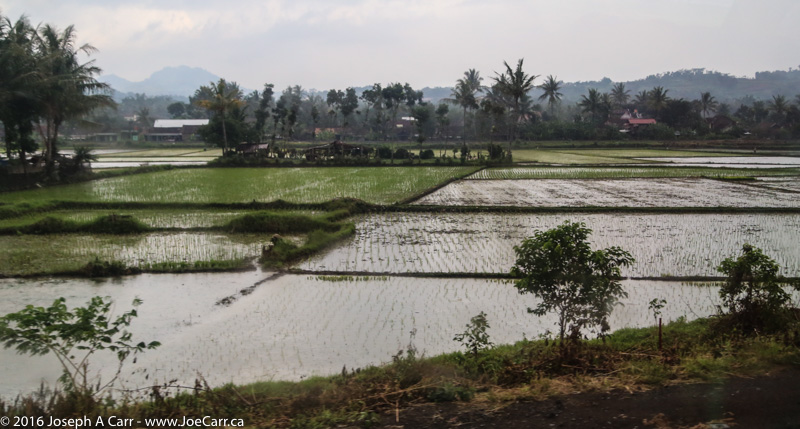 Flooded rice fields in Indonesia