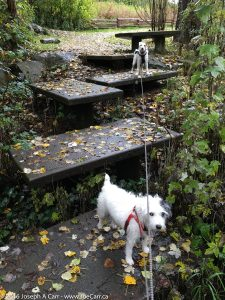 Tanner and Rolly on the stepping stones over the Colquitz River
