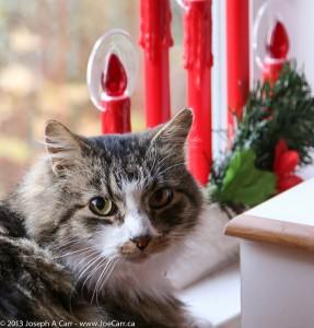 Coda and the Christmas candles